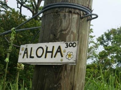 Big Island Zipline Botanicalworld.com